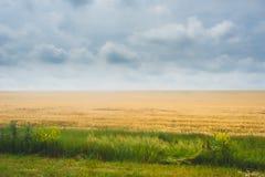 在农业绿色领域的日落 严重的天空 库存图片