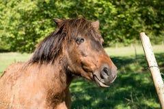 在农厂侧视图的良种马 免版税库存照片
