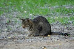 在农厂关心伴侣关心伴侣的猫 库存图片