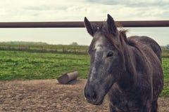 在农厂大农场的美丽的马 免版税库存照片