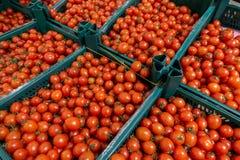 在农厂市场上的新近地被收获的蕃茄 库存图片