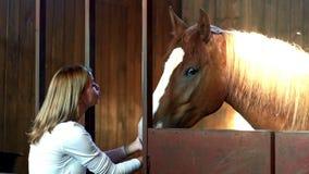 在农厂摊位的少妇感人的马 站立在槽枥的妇女和马 股票视频