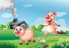 在农场的两头愉快的猪 免版税库存照片