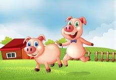 在农场的两头猪 免版税库存图片