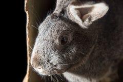 在农场的兔子 免版税库存照片