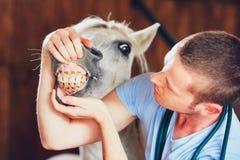 在农场的兽医 免版税库存照片