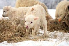 在农场的冬天。 库存图片