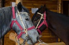 在农场的几匹马 免版税库存照片
