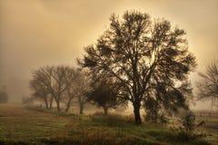 在农场的厚实的薄雾,南非 免版税库存照片