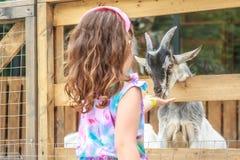 在农场的幼小愉快的女孩哺养的山羊 库存图片