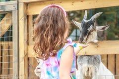 在农场的幼小愉快的女孩哺养的山羊 免版税图库摄影