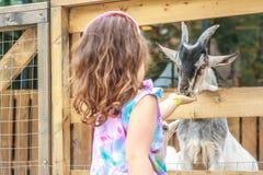 在农场的幼小愉快的女孩哺养的山羊 免版税库存图片
