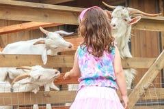在农场的幼小愉快的女孩哺养的山羊 免版税库存照片