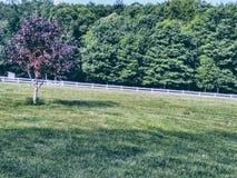 在农场的开放春天领域 免版税库存照片