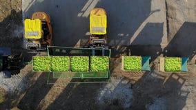 在农场的新被采摘的苹果收获 小装载者,叉架起货车,机器卸载并且装载,投入大木箱 股票录像
