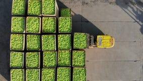 在农场的新被采摘的苹果收获 小装载者,叉架起货车,机载,充分投入了大木箱,容器  股票视频