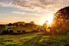 在农场的日出 免版税库存照片