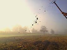 在农场的早晨 免版税库存照片
