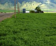 在农场的春天领域 免版税库存图片