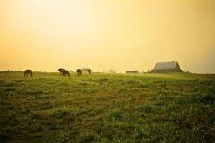 在农场的有雾的早晨 库存图片