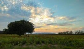 在农场的树 免版税库存照片