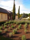 在农场的淡紫色灌木 库存图片