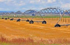 在农场的灌溉 库存图片