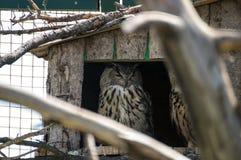 在农场的猫头鹰 免版税库存照片