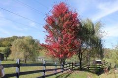 在农场的秋天 免版税库存照片