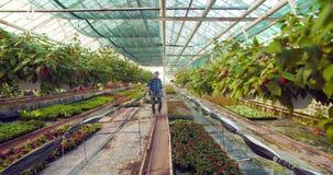 在农场的花匠浇灌的花 影视素材