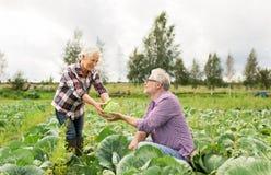 在农场的资深夫妇采摘圆白菜 库存照片