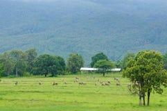 在农场的马。自然构成 图库摄影