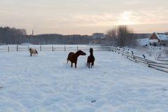 在农场的马日落的 免版税库存照片