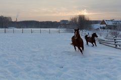 在农场的马日落的 图库摄影