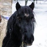 在农场的马,多雪的天气 库存照片