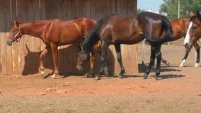在农场的马 股票视频