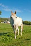 在农场的马 免版税库存照片