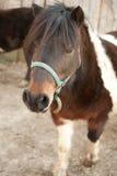 在农场的马 免版税库存图片