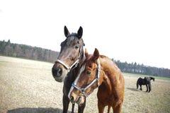 在农场结合马在夏天 图库摄影