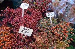 在农夫的市场上的通配野玫瑰果 免版税库存图片