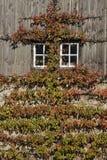 在农夫的façade的Espaliered果子 库存图片