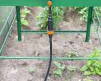 在农学节约水的水滴灌溉的现代系统和植物在庭院里,吸管分配器的生气勃勃和营养 免版税库存图片