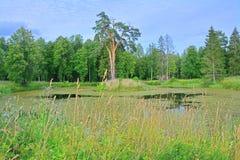 在农庄公园Znamenskoye-Rayok庄园筑成池塘(18世纪)在Torzhok区 免版税库存图片