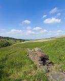 在农村乡下风景的石块墙与象草的山坡、树和蓝天与云彩在约克夏 免版税库存图片