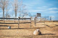 在农村乡下风景的绵羊 免版税库存照片