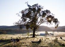 在农村农场的早晨太阳在澳大利亚 图库摄影