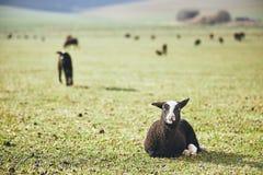 在农村农场的晴朗的早晨 免版税库存图片