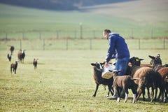 在农村农场的晴朗的早晨 库存图片