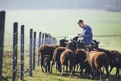 在农村农场的晴朗的早晨 库存照片