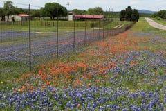 在农村农田的得克萨斯野花 图库摄影